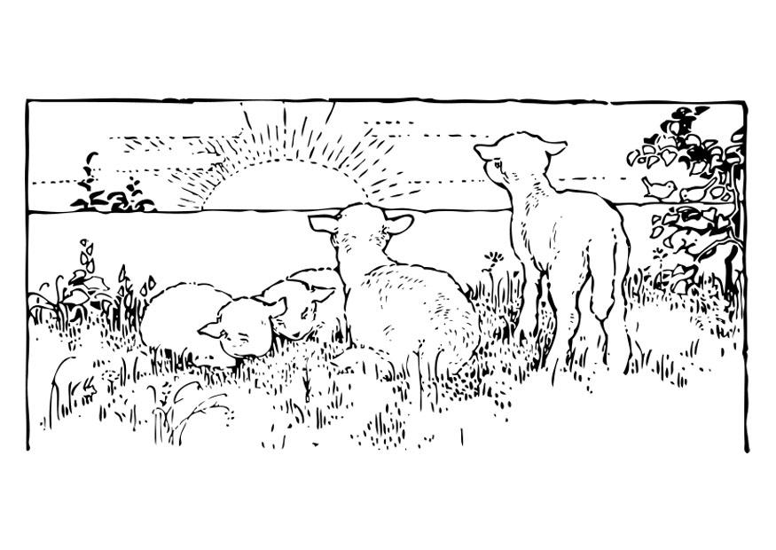 Kleurplaat Landschap Met Lammetjes Afb 27460