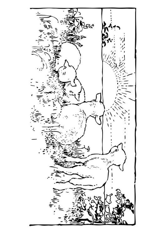 Kleurplaat Landschap Met Lammetjes Afb 27462