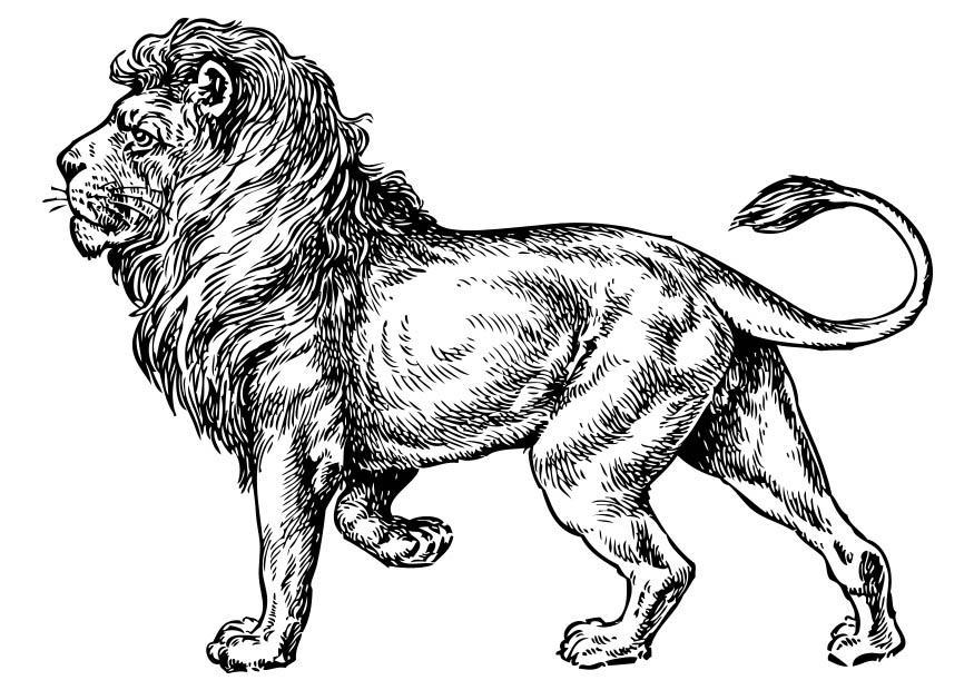 Kleurplaat Leeuw Afb 17373