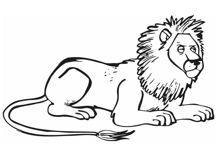 Kleurplaat Leeuw Afb 12841