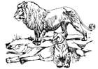 Kleurplaat leeuw en leeuwin