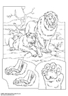 Kleurplaat leeuwen