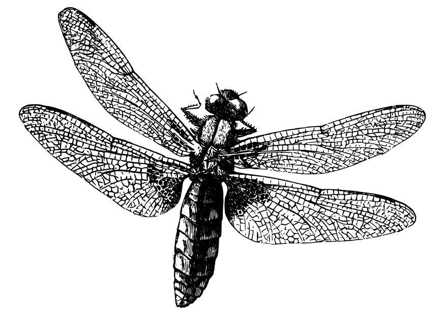 Kleurplaat Libelle Afb 27982
