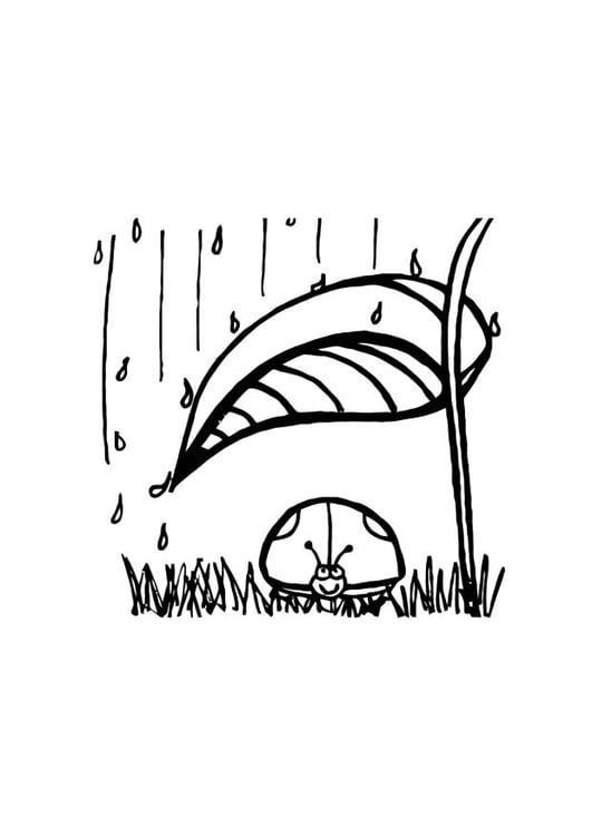 Kleurplaat Lieveheersbeestje Shuilt Voor De Regen Afb 10717