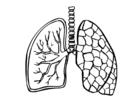 Kleurplaat longen