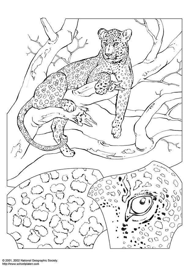 Kleurplaat Dieren In Het Bos Kleurplaat Luipaard Afb 3069