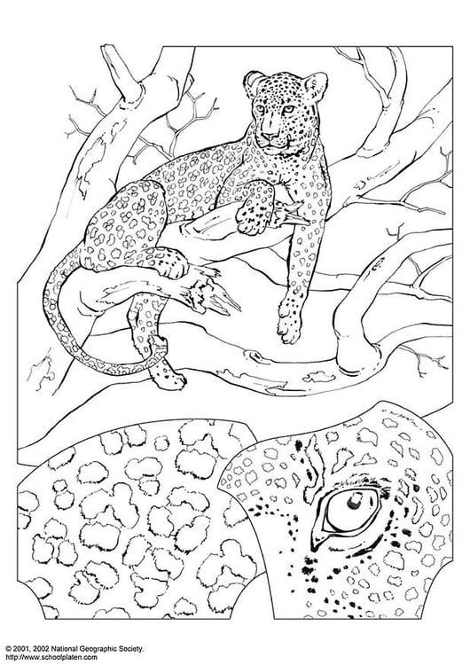 Kleurplaat Van Een Luipaard Archidev