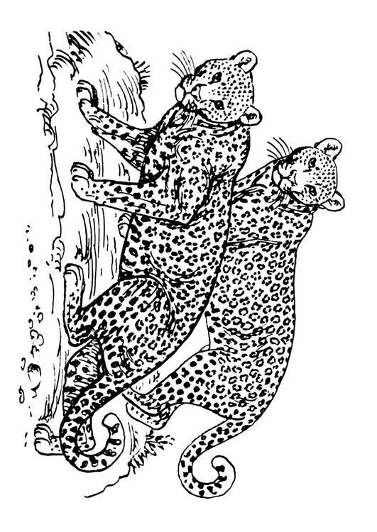 Kleurplaat Luipaard Afb 16631