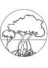 Kleurplaat mangrove bomen