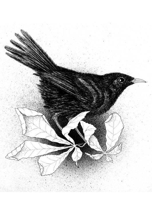 Afbeeldingen Vogels Kleurplaten Kleurplaat Merel Afb 9396