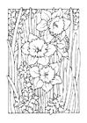 Kleurplaat narcis