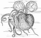 Kleurplaat nautilus - inktvis