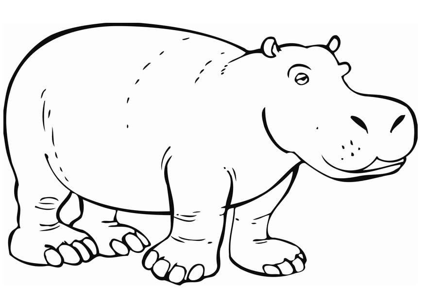 Kleurplaat Nijlpaard Afb 12842