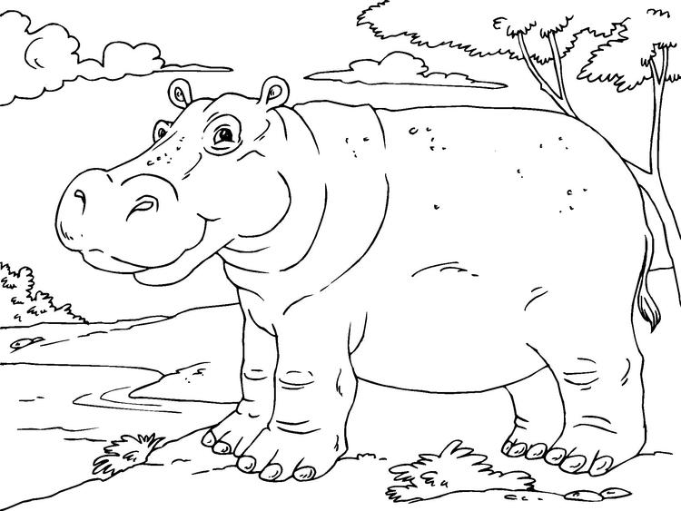 Kleurplaat Nijlpaard Kleurplaat Nijlpaard Gratis Kleurplaten Om Te Printen