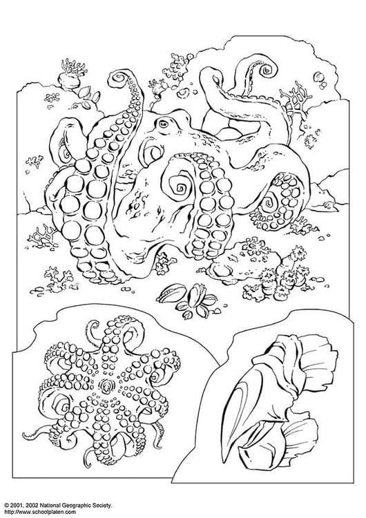 Kleurplaat Octopus Afb 3071