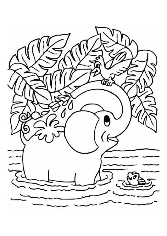 Kleurplaat Olifant Afb 12543