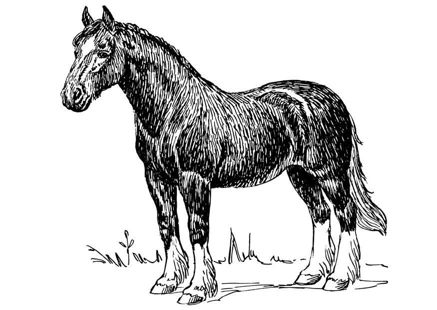 Kleurplaten Dieren Paarden Kleurplaat Paard Gratis Kleurplaten Om Te Printen