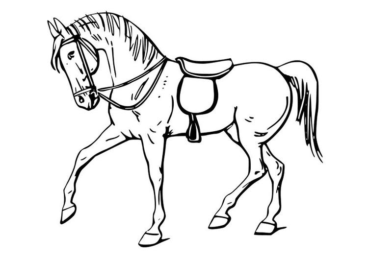 Kleurplaat Paard Afb 10347