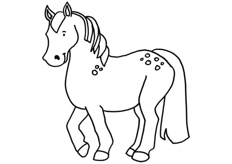 kleurplaat paard - afb 18664.