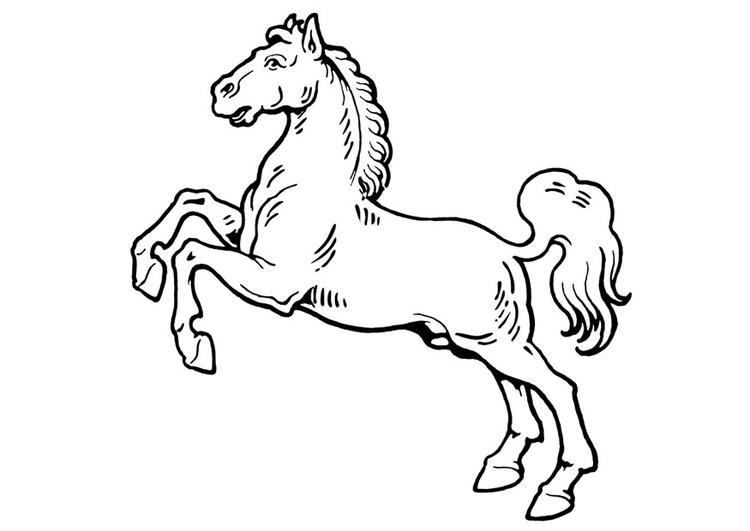 Kleurplaat Paard Afb 19310