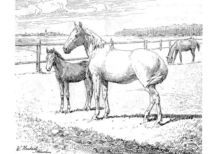 Google Kleurplaten Paarden.Kleurplaat Paard Met Veulen Afb 9772
