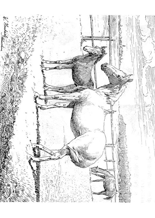 Paarden Kleurplaat Moeilijk Kleurplaat Paard Met Veulen Afb 9772
