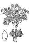 Kleurplaat palm - betelpalm met betelnoot