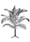 Kleurplaat palm