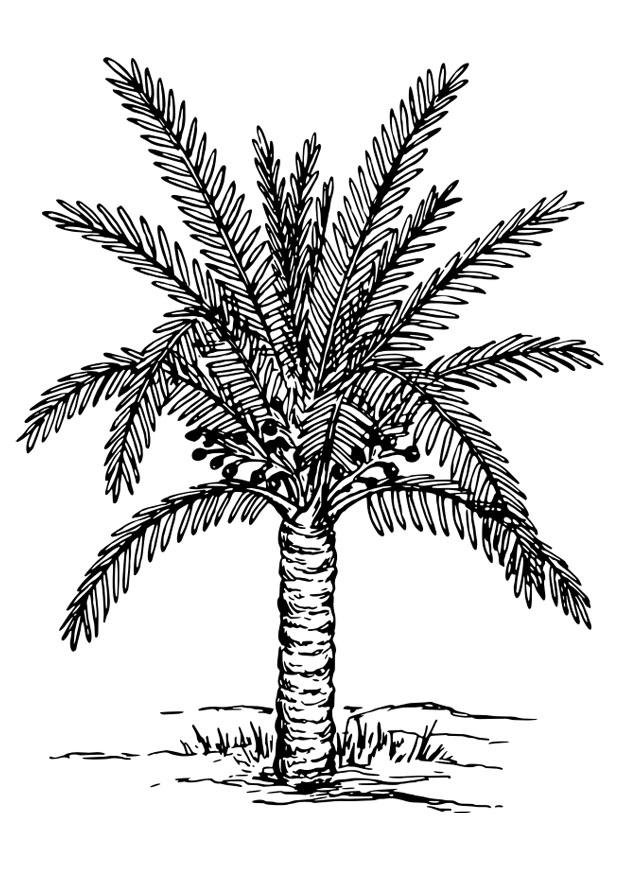 kleurplaat palmboom afb 30138 images