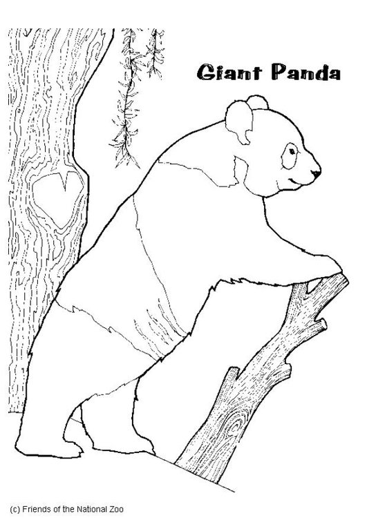 Kleurplaat Panda Afb 5988