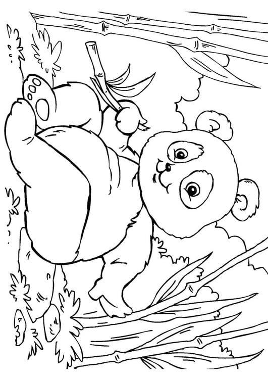 Kleurplaten Dieren In Het Wild Kleurplaat Panda Afb 27859