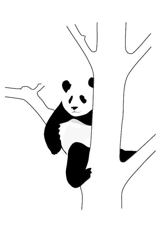Kleurplaat Pandabeer In Boom Afb 19628