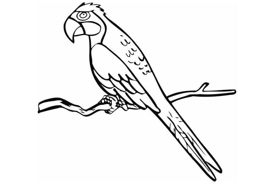 kleurplaat papegaai gratis kleurplaten om te printen