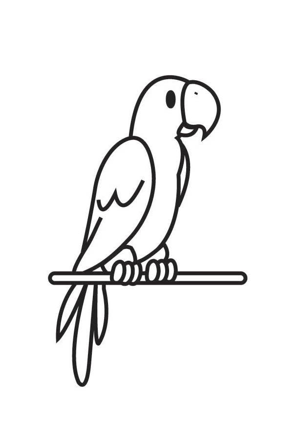 kleurplaat papegaai afb 18004