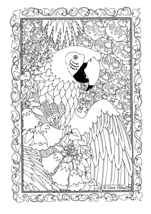 kleurplaat papegaai afb 19582