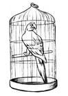 Kleurplaat papegaai in kooi