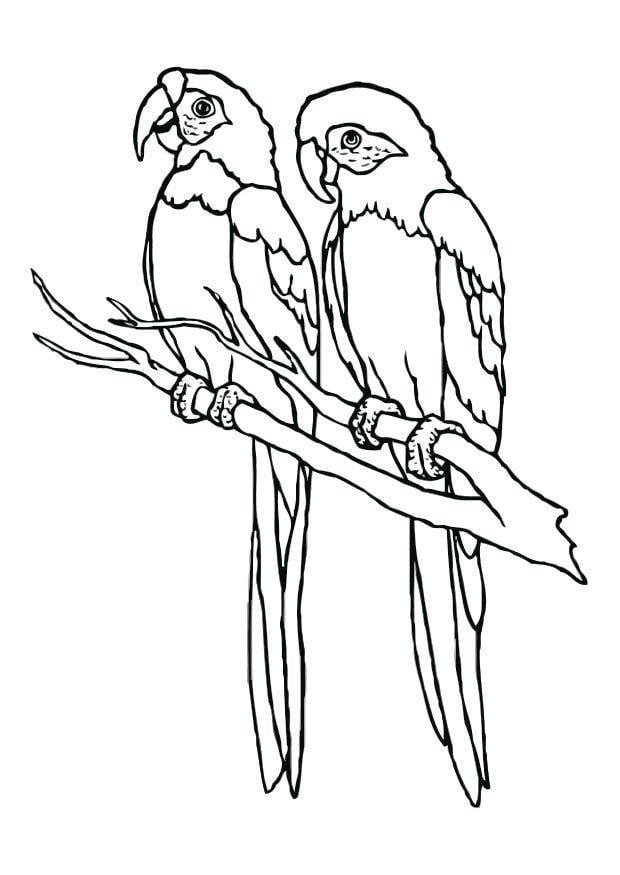 kleurplaat papegaaien gratis kleurplaten om te printen