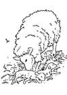 Kleurplaat pasgeboren lammetje