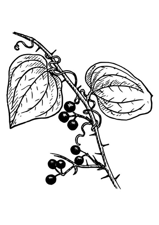 Kleurplaat plant afb 27413 for Plantas ornamentales para colorear