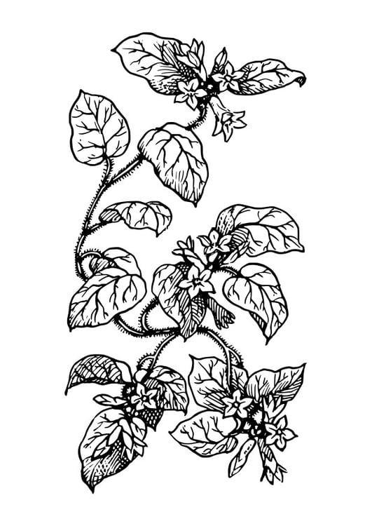 Kleurplaten Bloemen En Planten.Kleurplaten Planten Bloemen Kleurplaat Bloemen Kleurplaten