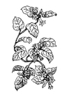 Kleurplaat plant
