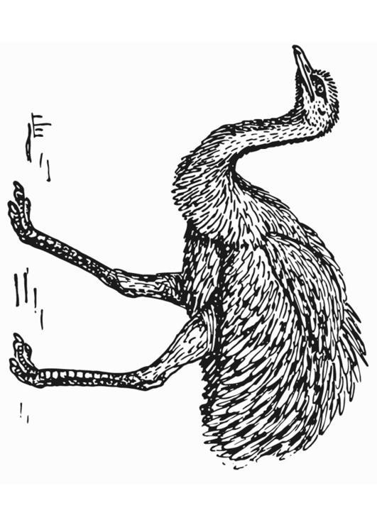 Kleurplaten Dieren Google Kleurplaat Rhea Struisvogel Afb 13278