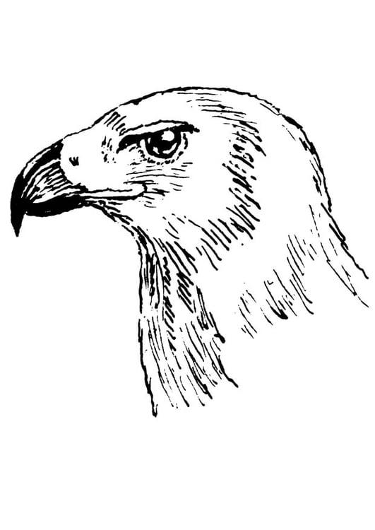 Uil Kleurplaten Printen Kleurplaat Roofvogel Gratis Kleurplaten Om Te Printen
