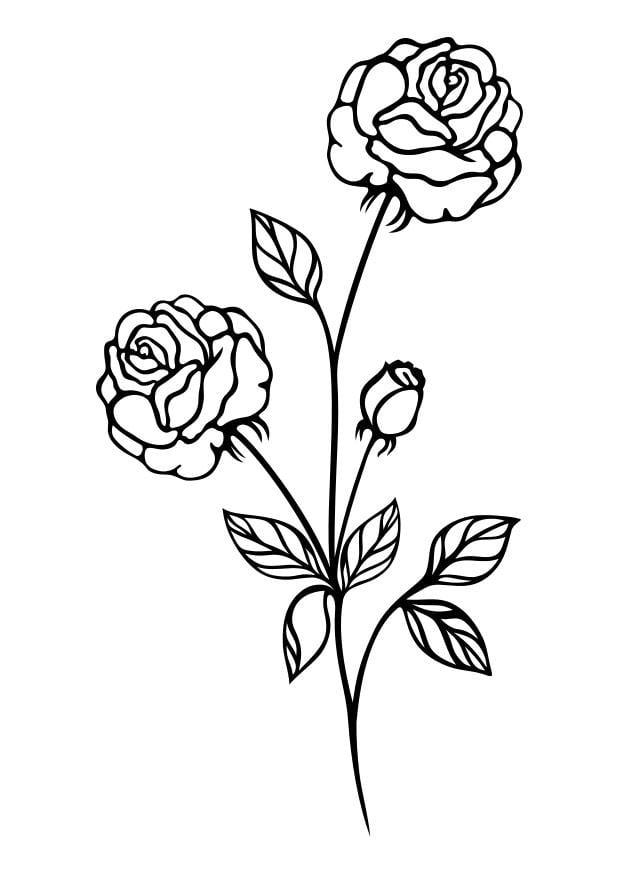 Kleurplaat Roos Afb 29722