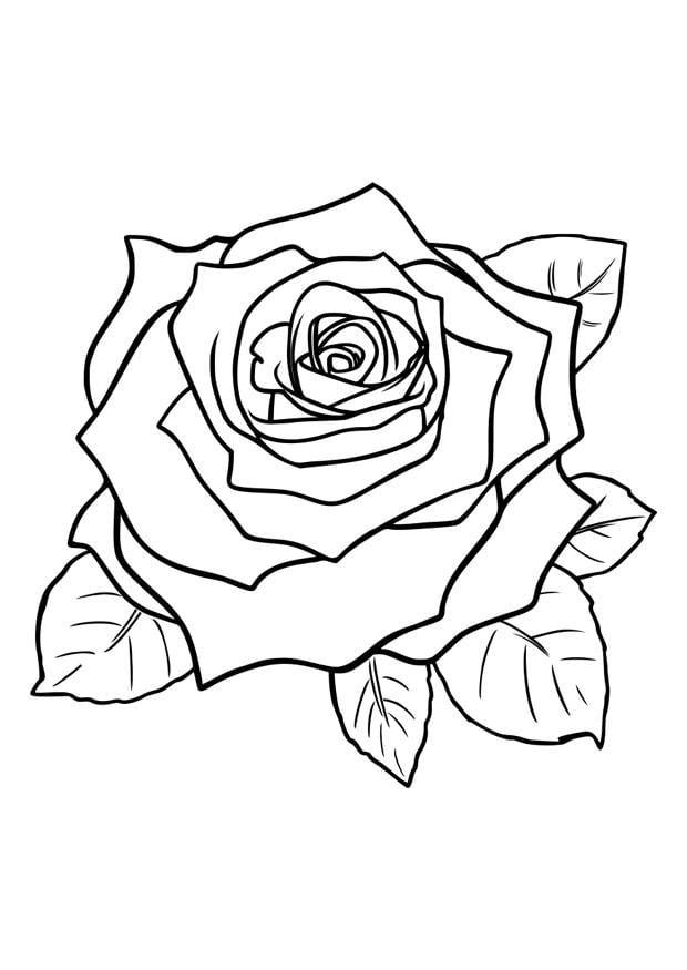Kleurplaat Roos Afb 29751