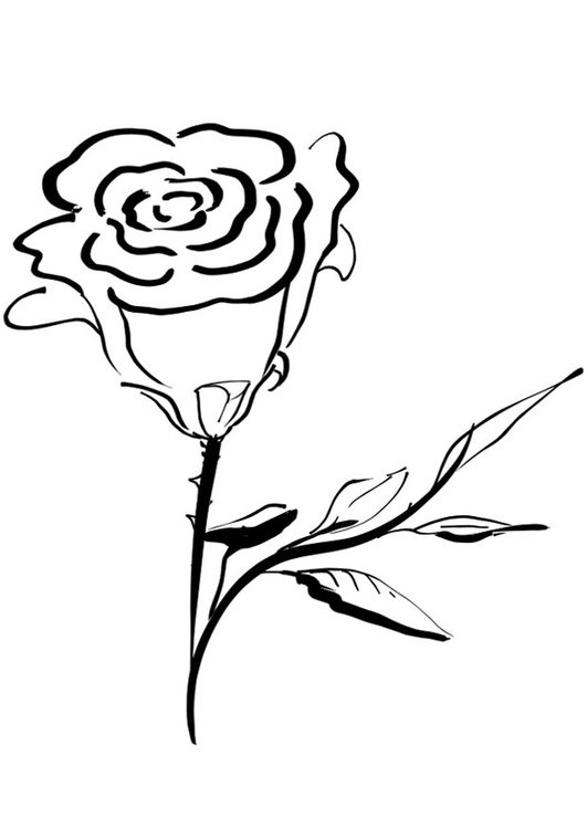 Kleurplaat Roos Afb 21253