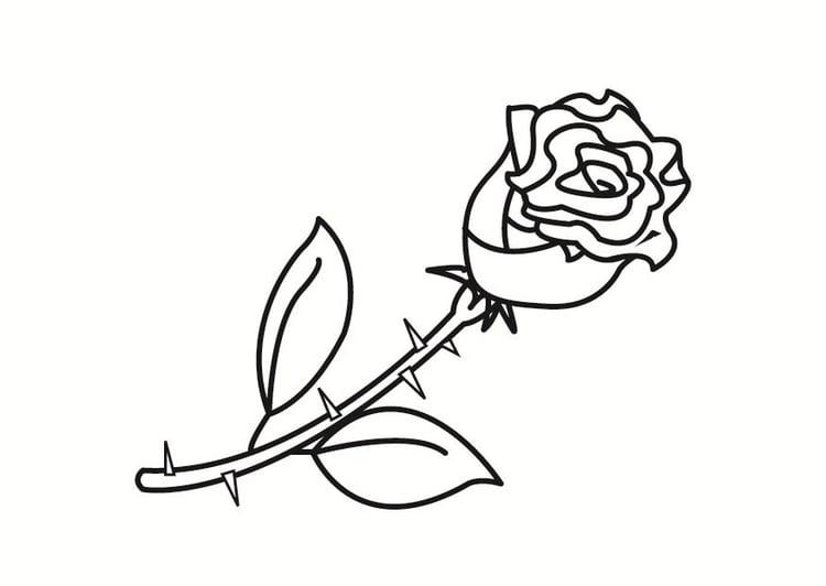 kleurplaat roos afb 23348