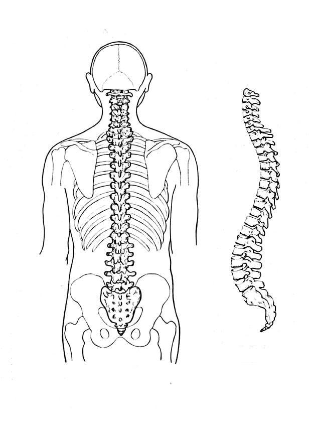 Atlas anatomia humana imagens