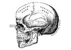 Kleurplaat schedel
