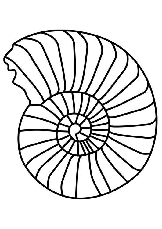 Afbeelding Dolfijn Kleurplaat Kleurplaat Schelp Ammoniet Afb 27190